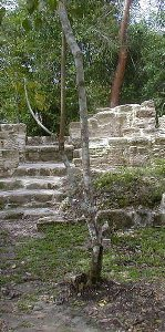 Sonme slightly cleared ruins at El Pilar outside San Ignacio Belize